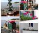 Renovación de plantas y flores en las galerías